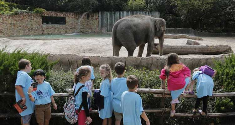 visiting zoo with kids